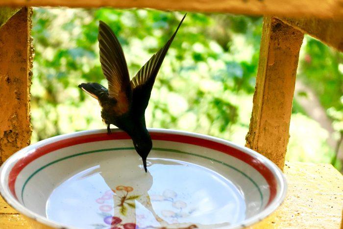 Kolibris im Tiefflug am Acaime-Haus