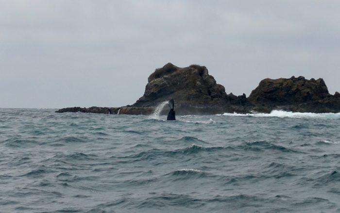 Der geneigte Leser erkennt hier sofort den winkenden Buckelwal