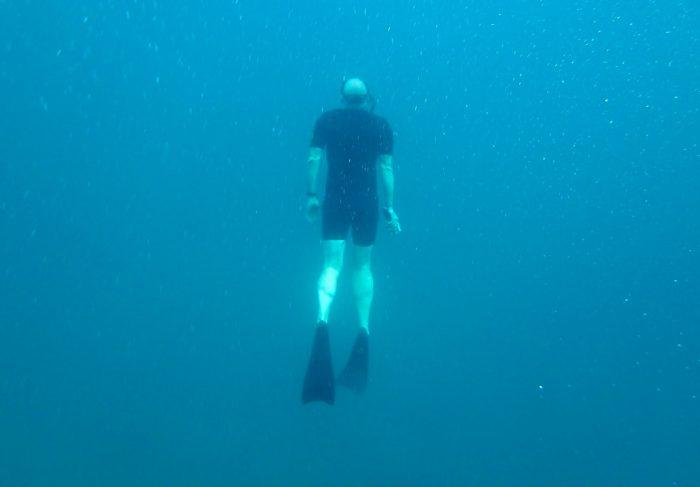 Die dicke Nordseerobbe ist ein ganz seltener Anblick auf den Inseln