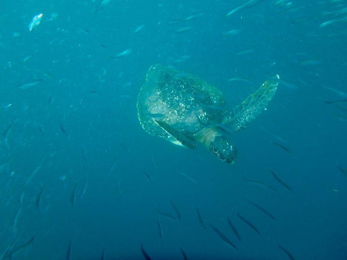 Die Seeschildkröten am Ende auch noch zu Gesicht bekommen